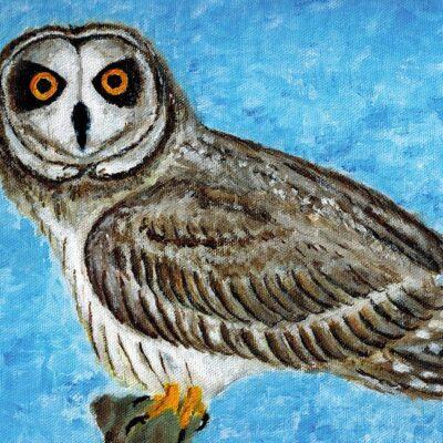 owl-1024x737-1-1024x650